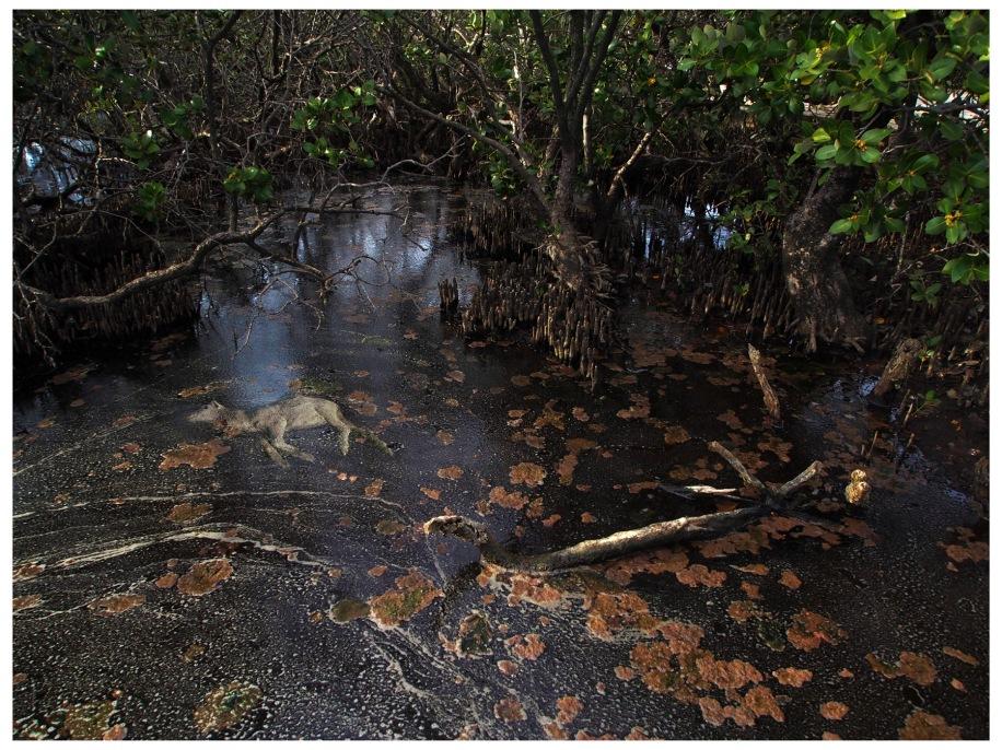 Hellfire Creek, 2014, photo on metallic paper, limited edition