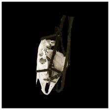 Horse Head, 2014, lambda photo print on metallic paper. 54 x 54 cm. Edition of 3.